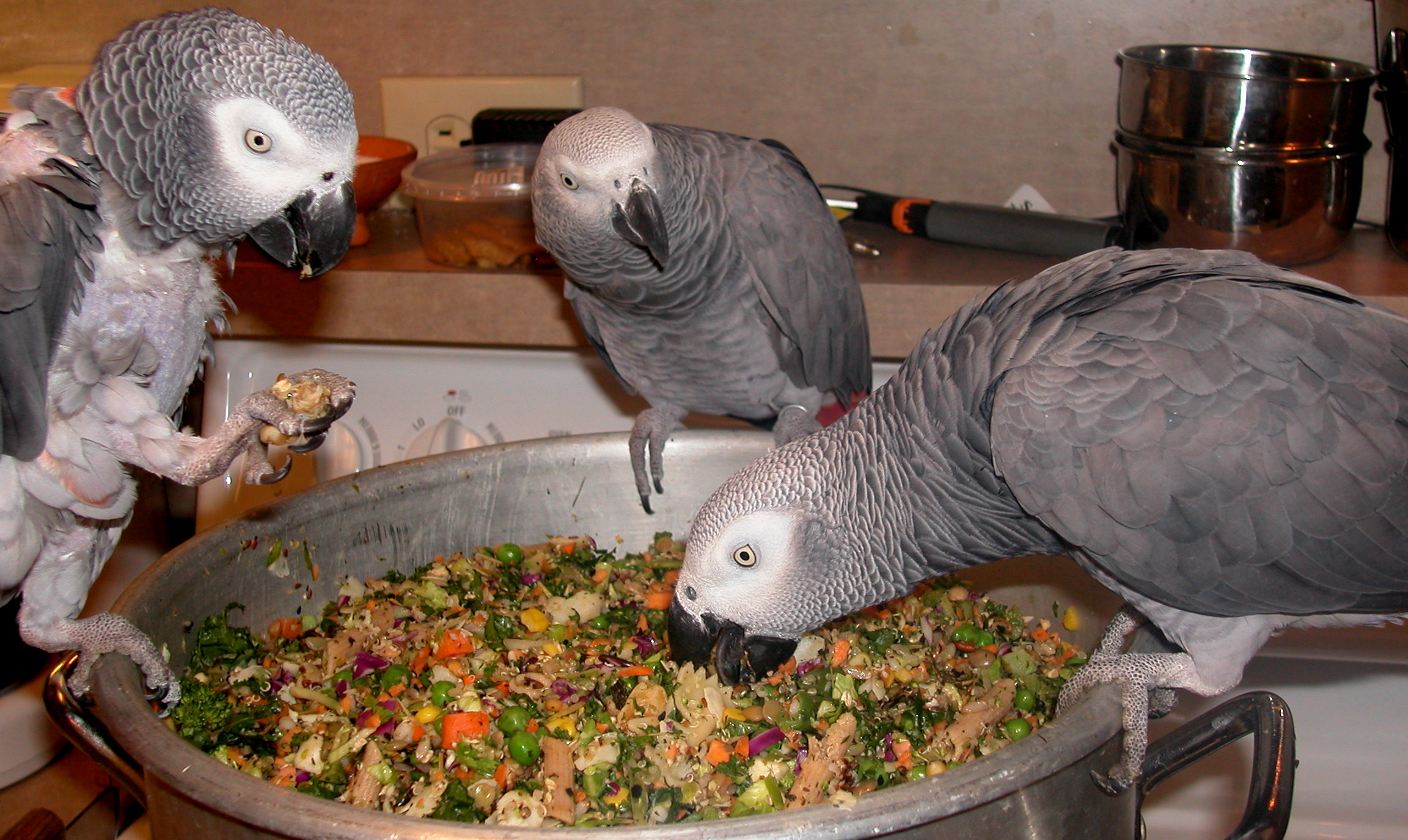 Macaw Parrot Food Recipes