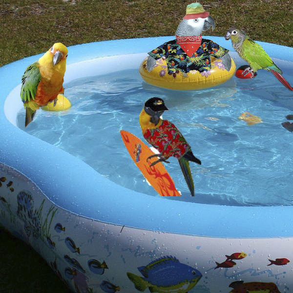 Image result for parrots swimming