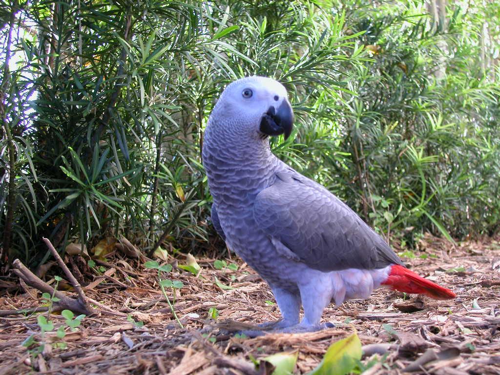 marathi parrot