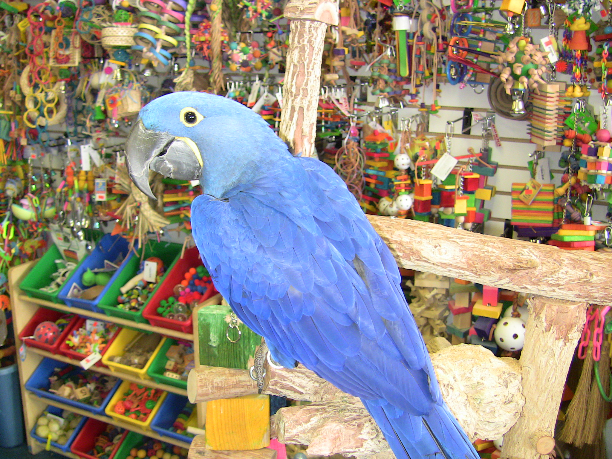 Preparing Yourself For Getting a Bird – Parrot Nation