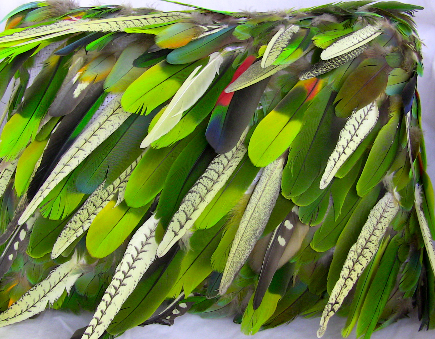 Parrot feathers - photo#22