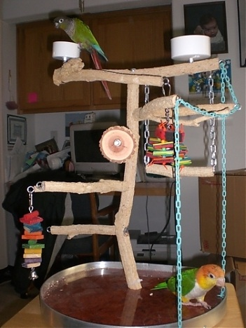 Play gyms for parrots a necessity parrot nation for How to build a bird stand