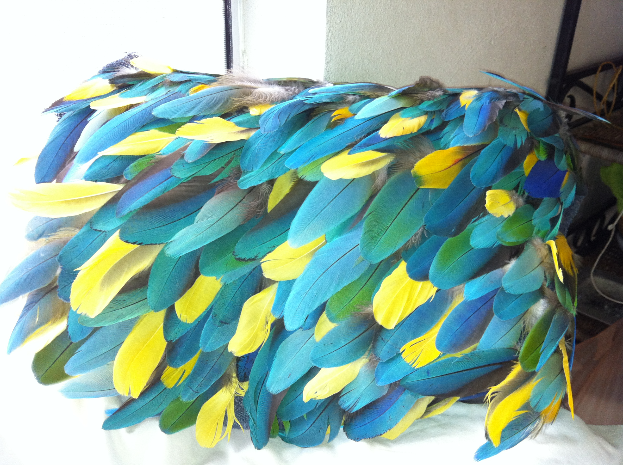 Parrot feathers - photo#14