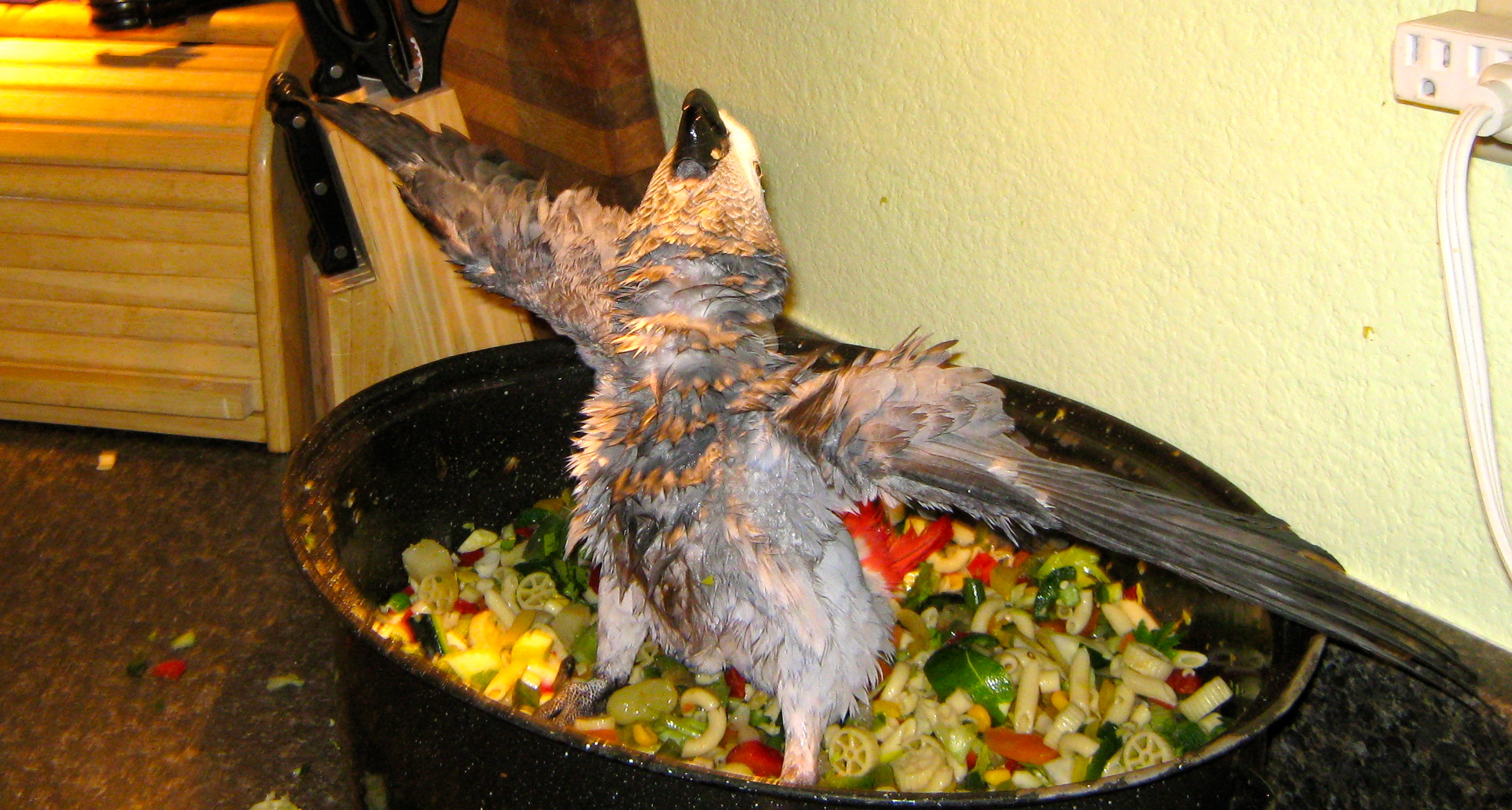 I Found This Browsing For Chop Recipes Anyone Want To Caption This Parrots