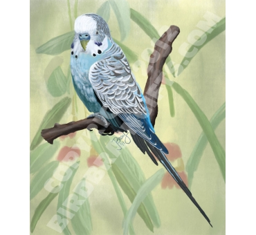 blue-budgie-by-janet-bray-giclee-print