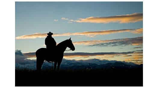 cowboy-horse-dawn