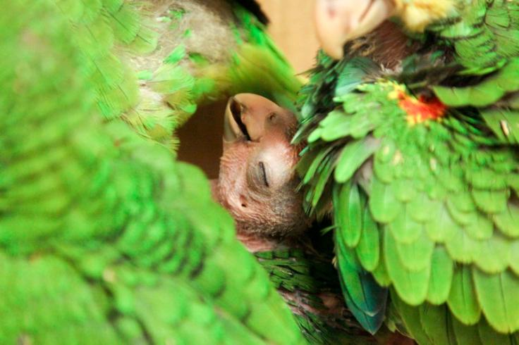 Phoebe Bird
