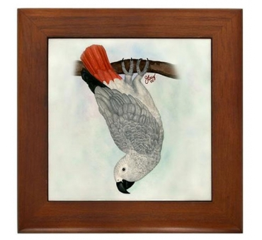 toby-the-congo-african-grey-framed-tile